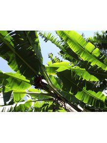 quadro-verdes-tropicais