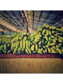 quadro-banana-da-terra