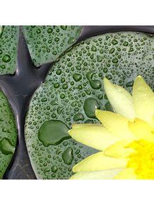 quadro-flor-amarela-mlv