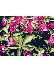 quadro-les-fleurs