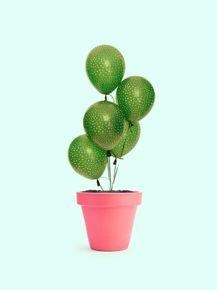 quadro-cactus-balloon