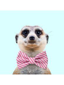 quadro-meerkat