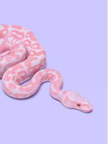 quadro-pink-snake