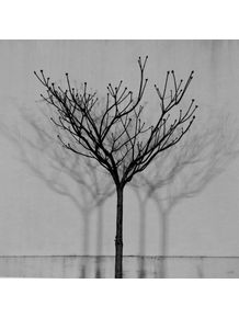 quadro-sombras-01