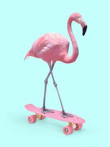 quadro-skate-flamingo