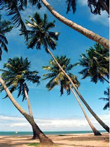 quadro-paraiso-tropical-34
