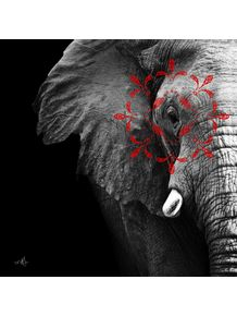 quadro-conectividade-elefante