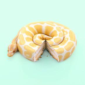 quadro-snake-cake