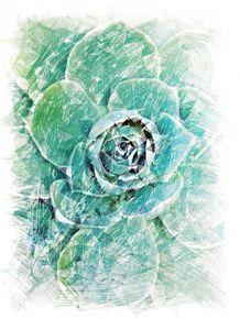 quadro-greenery-suculenta