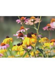 quadro-abelha-no-jardim