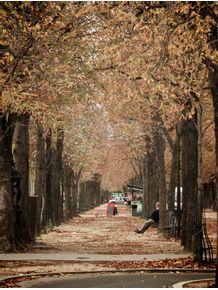 quadro-boulevard-de-outono-em-paris