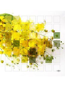 quadro-true-colors-06