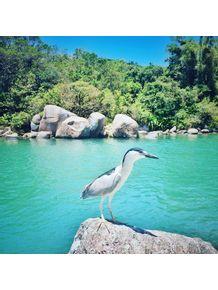 quadro-gaivota-no-verde