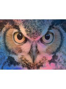 quadro-pink-and-blue-owl