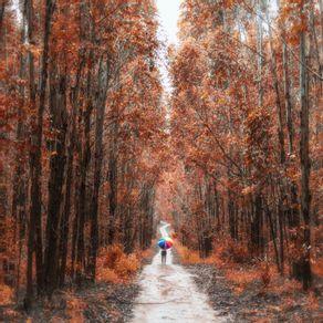 quadro-umbrella-in-the-woods