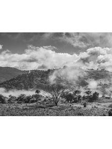 quadro-tree-in-the-fog