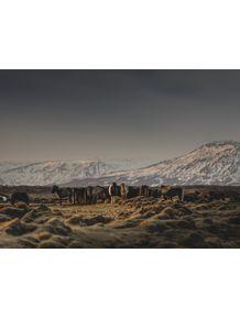 quadro-icelandic-horses