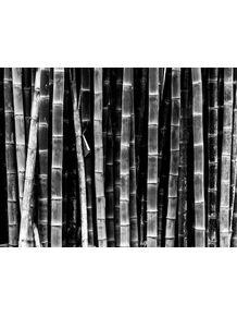 quadro-bambuzal-fazenda-santa-maria