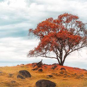 quadro-autumn-tree