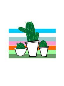 quadro-cores-cactus