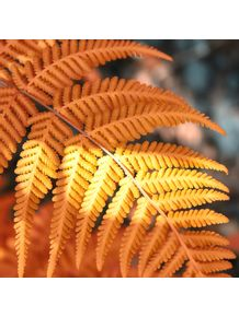 quadro-orange-fern