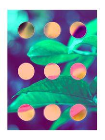 quadro-dotted-plants