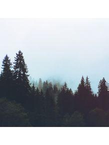 quadro-washington-forest