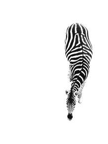quadro-zebra-pb
