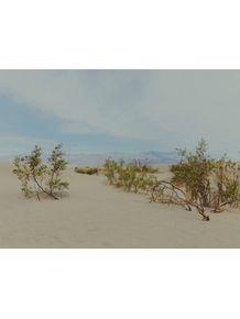quadro-desert-beauty