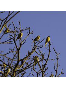 quadro-passarinhos-amarelos-1