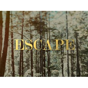 quadro-escape-forest