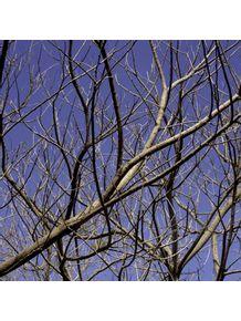 quadro-galhos-sobre-ceu-azul-1