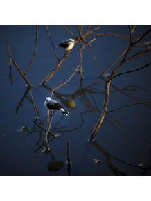quadro-passarinhos-sobre-agua-1