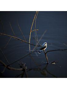 quadro-passarinhos-sobre-agua-2
