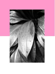 quadro-plantal-negro