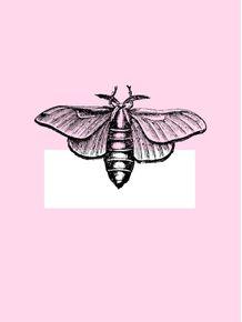 quadro-borboleta-rose