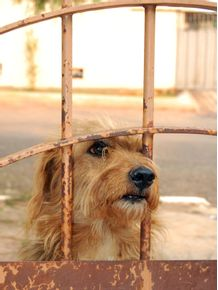 quadro-ralph-puppy