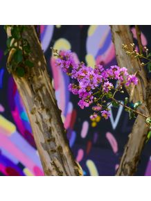quadro-flor-beco-do-batman-1