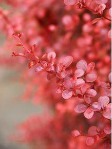 quadro-flor-rosa-01