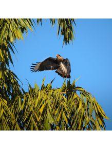 quadro-o-pouso-da-aguia