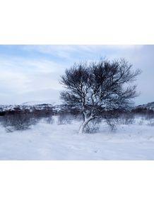 quadro-iceland-snow