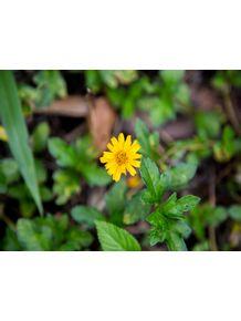 quadro-a-bela-flor-amarela