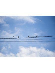 quadro-familia-passarinho