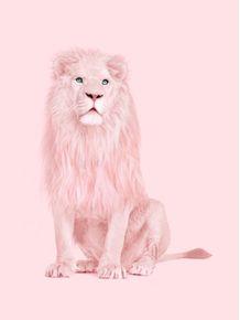 quadro-albino-lion