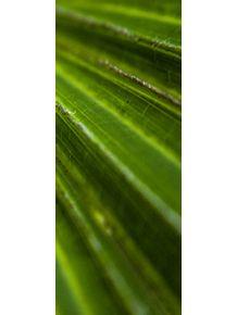 quadro-verde--triptico-3
