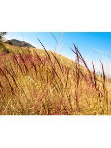 quadro-montanha-vermelha