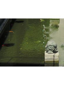 quadro-head-in-the-water