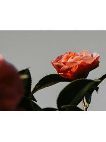 quadro-primavera-cinza