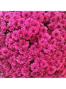 quadro-pink-it