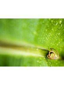 quadro-fibonacci-verde